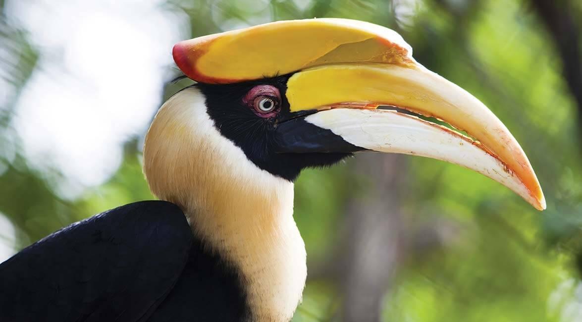 Rare bird in Sabah