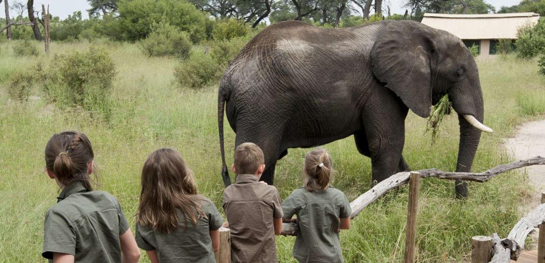 Elephant, Africa, Safari, Family