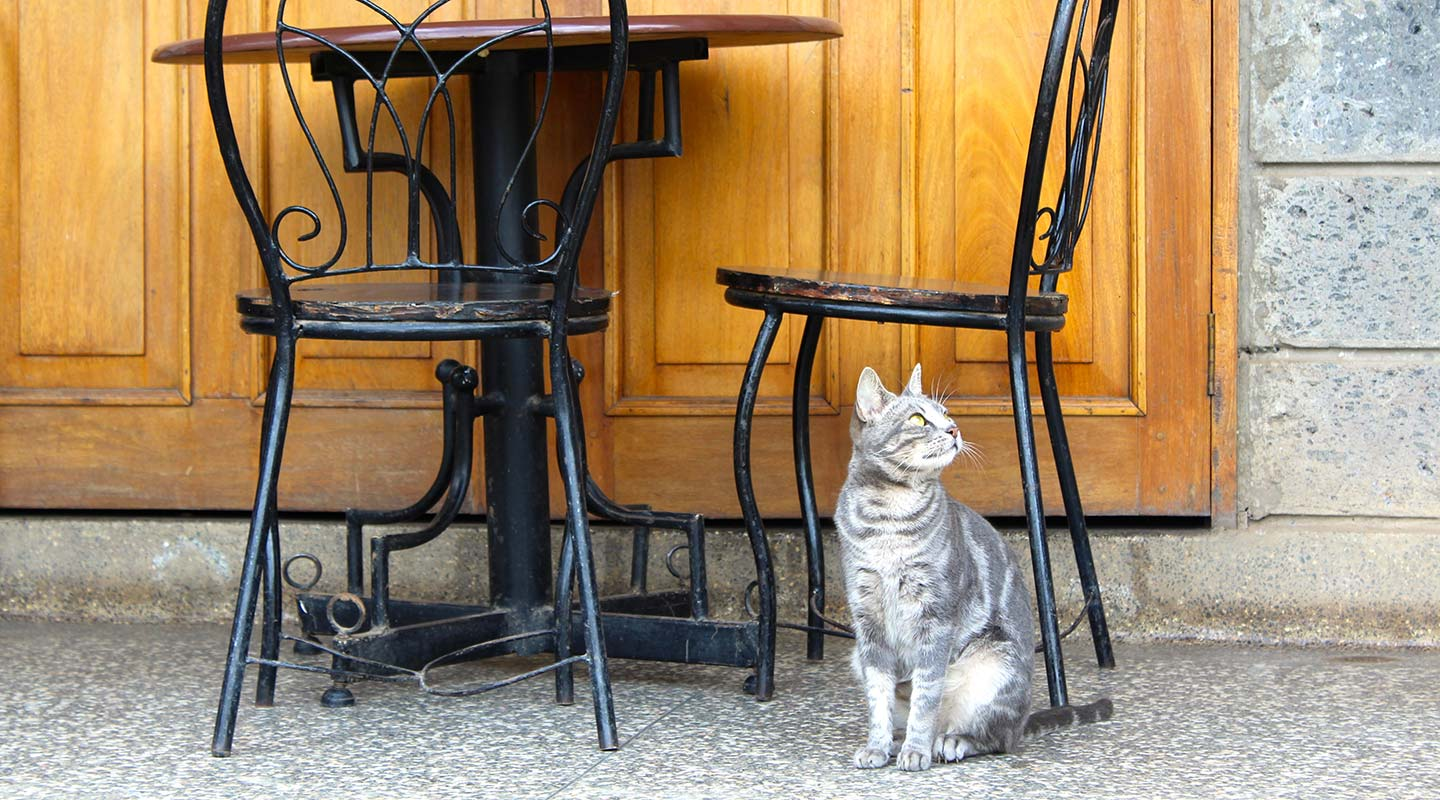 Cat at cafe