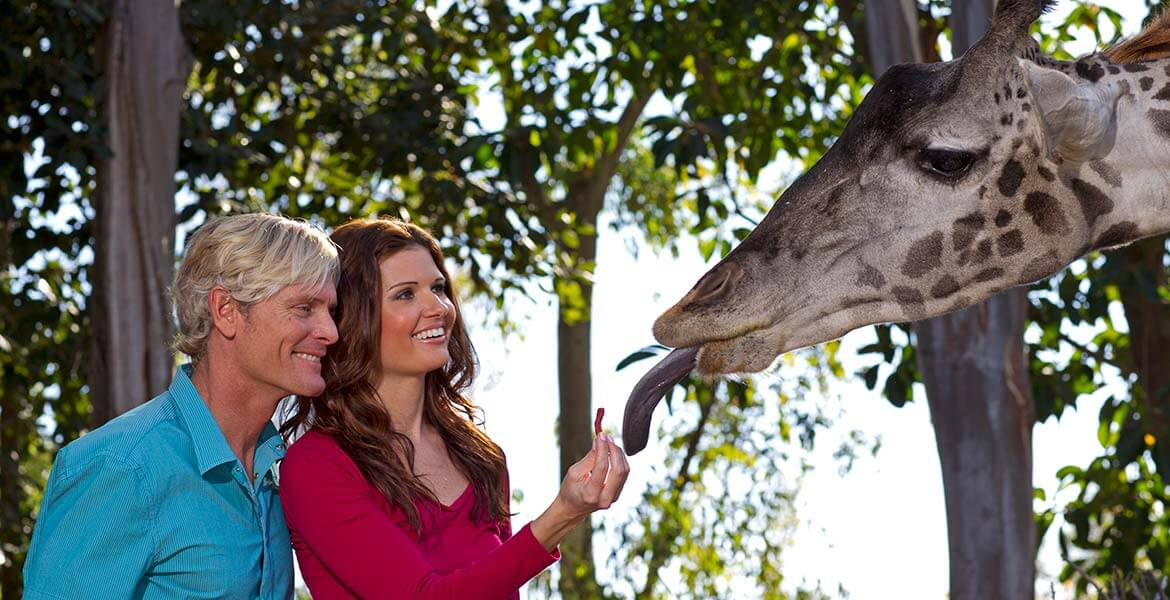 San Diego Zoo's Insiders Look Tour