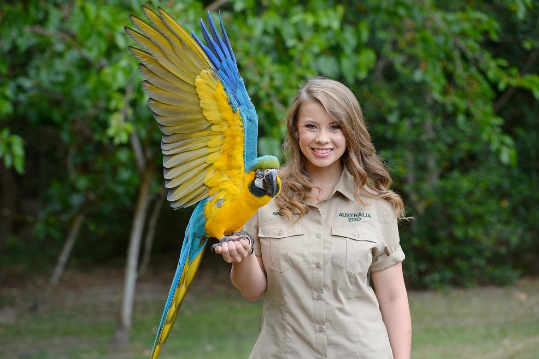 Blue gold macaw at Australia Zoo