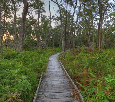 Boardwalk at BIG4 Koala Shores Holiday Park
