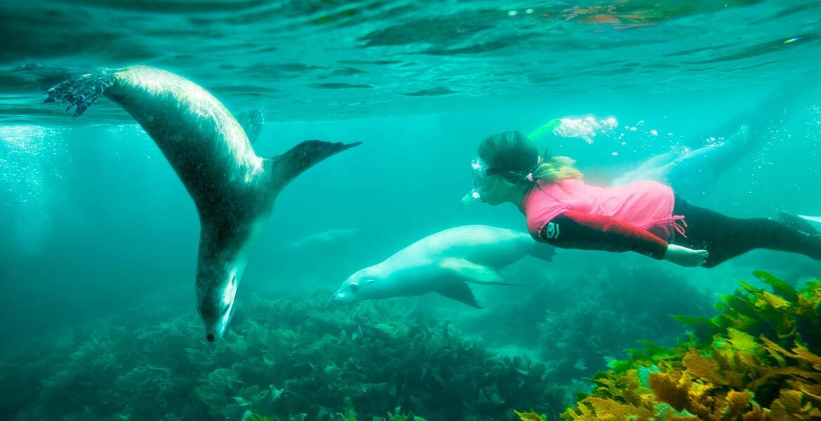 Swimming with sea lions with Adventure Bay Charters