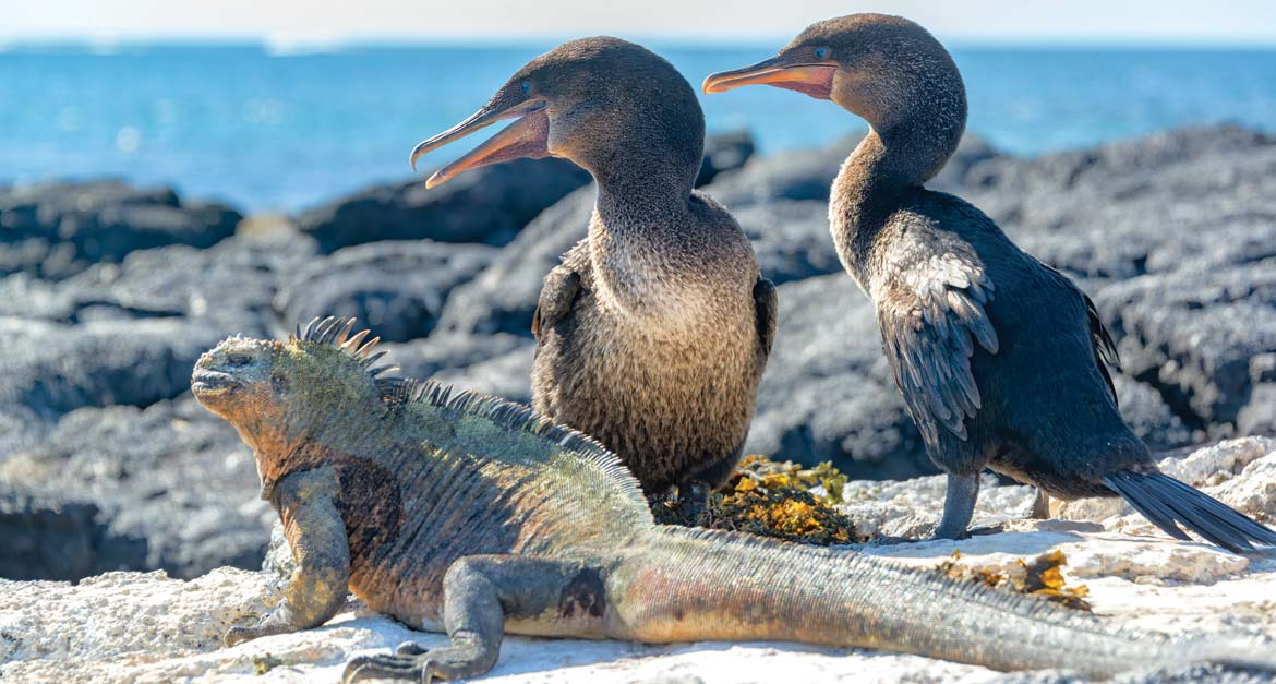 Wildlife of the Galápagos Islands