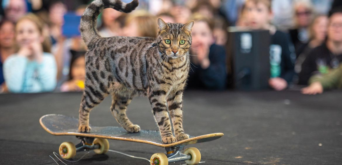 Cat riding a skateboard at Cat Lovers Show