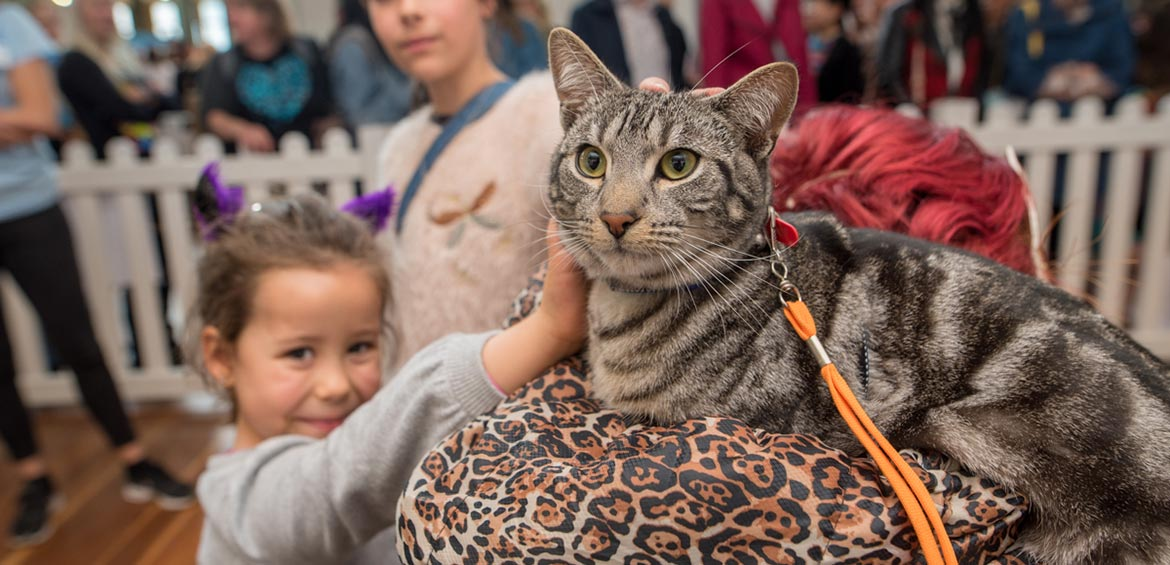 Meet the cats at the Cat Lovers Show