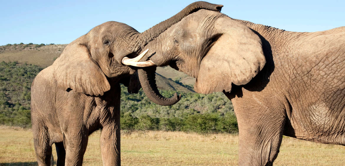 South Africa's Addo Elephant National Park is home to some of Africa's easiest-to-find gentle giants