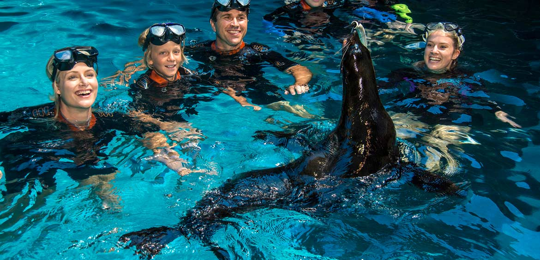 Seal Swim at SEA LIFE Sunshine Coast