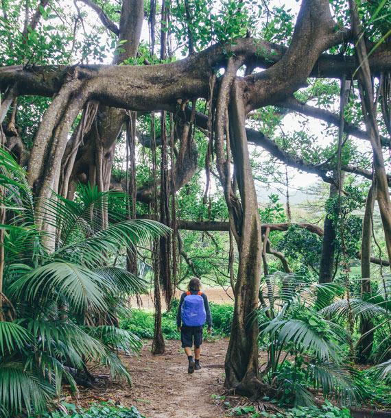 Banyan Track