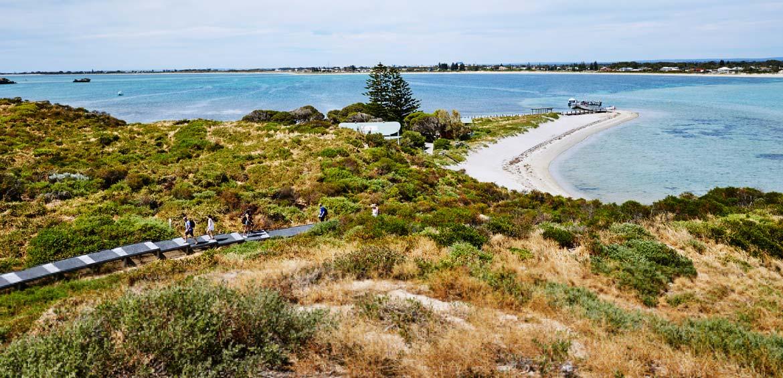 Penguin Island walking track
