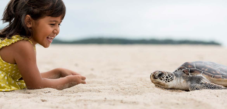There's turtles on the beach at Angsana Laguna Phuket