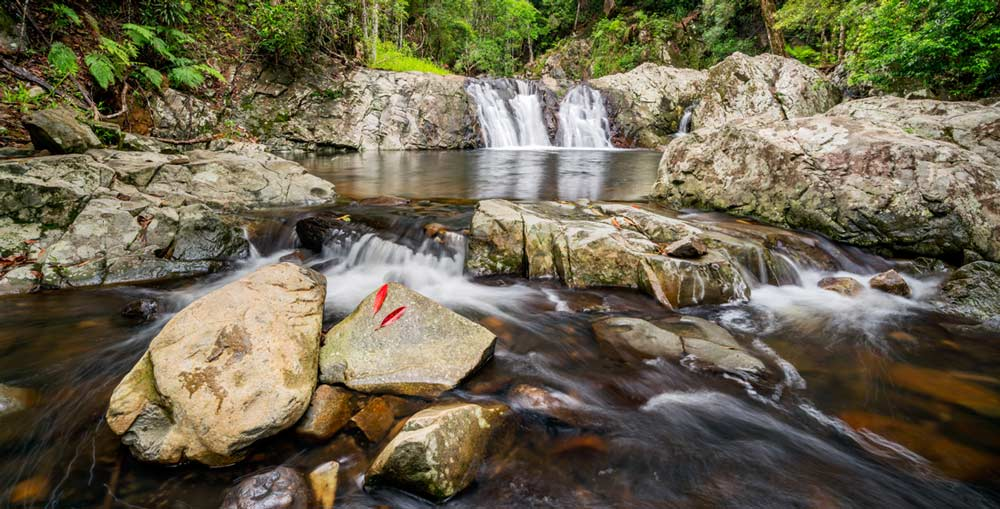 Cascades in Queensland's Springbrook National Park