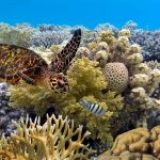 8 tips to help protect the Great Barrier Reef