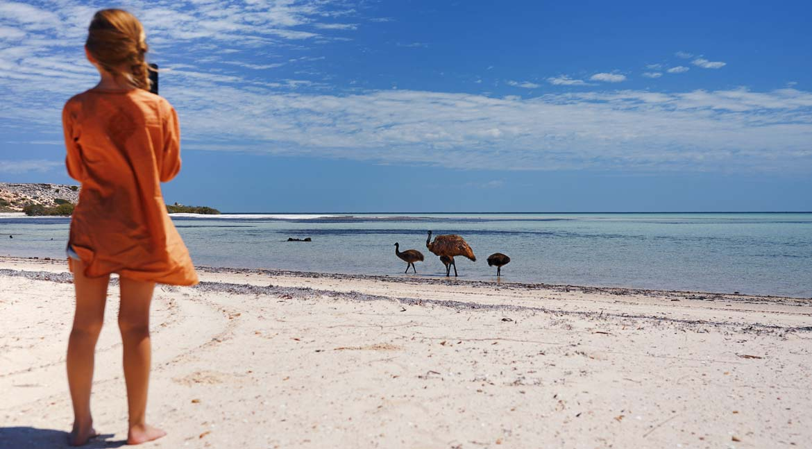 Emus cooling off at Eagle Bluff