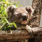 Here's where you can donate to help Australia's bushfire-affected wildlife