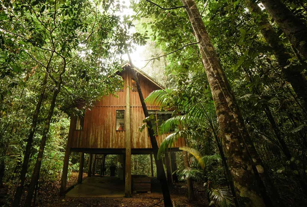 Canopy Treehouses