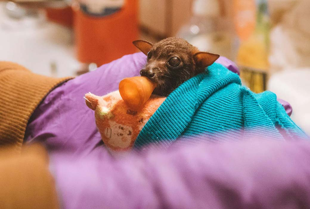 Things to do in Atherton Tablelands: Bat Hospital Visitor Centre