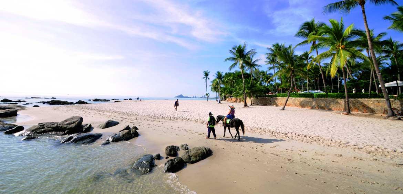 Coconut palm and horse on the hua hin beach,Hua Hin beach Thailand.