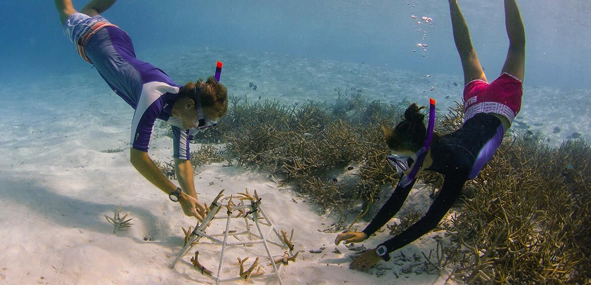 Anantara Dhigu Maldives. Coral Adoption with a marine biologist