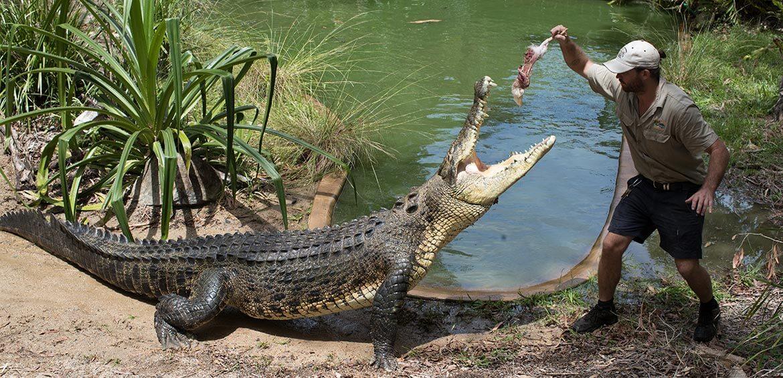 Croc Attack Show at Hartley's Crocodile Adventures