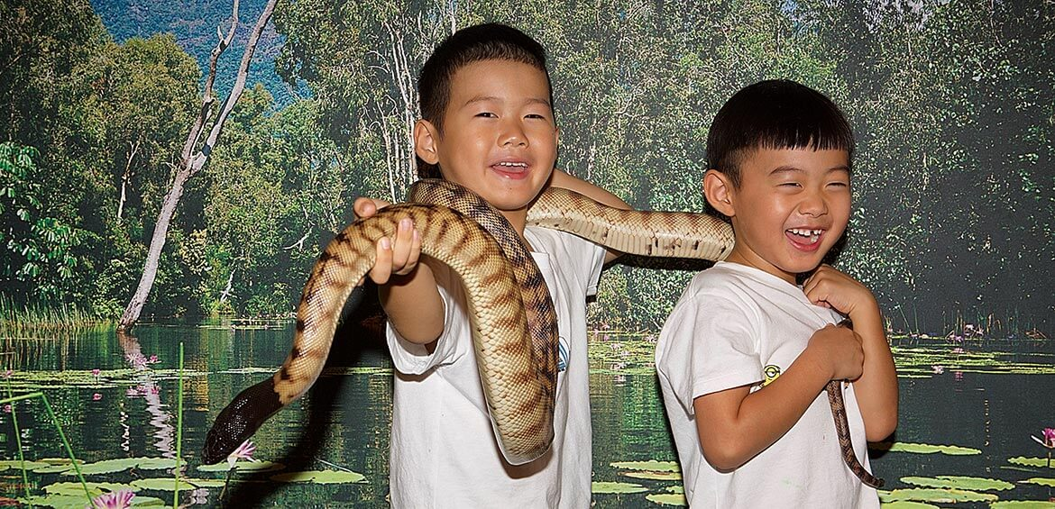 Get a photo with a snake at Hartley's Crocodile Adventures