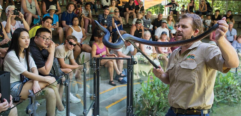 Snake Show at Hartley's Crocodile Adventures