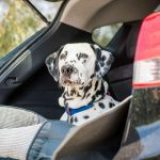 Dog travel checklist: What to pack for your pooch-friendly holiday