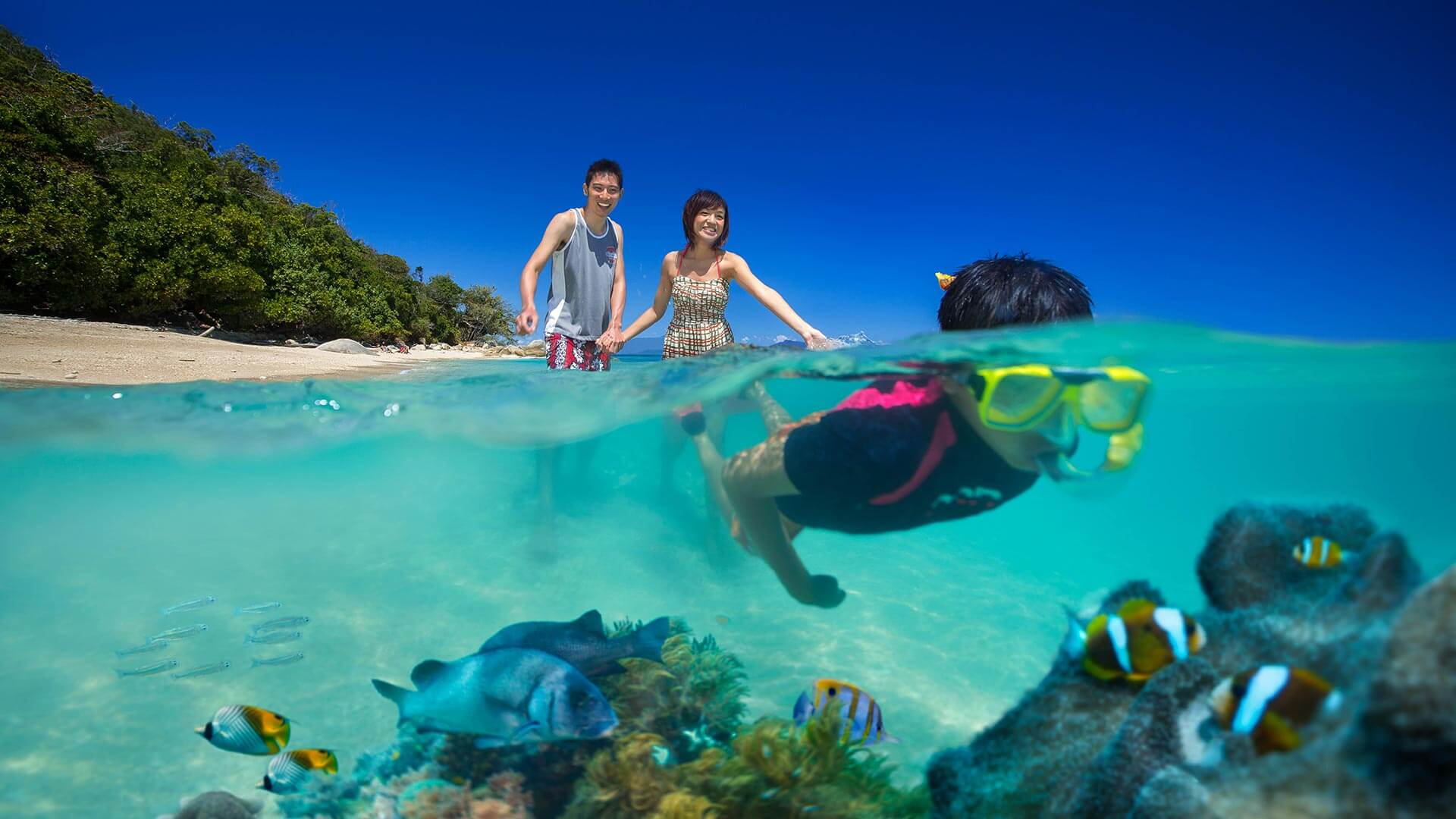 Snorkeling at Fitzroy Island Resort
