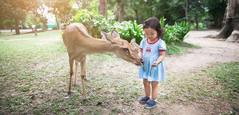 Feed the deer in Nara Park, Japan