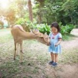 5 must-visit places in Nara and Ise Shima