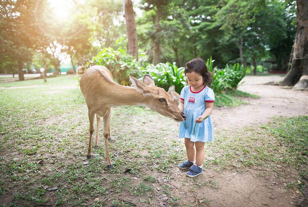 Girl feeding the deer in Nara Park