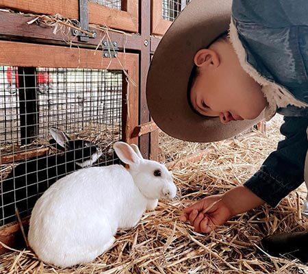 Bunnies at Hosanna Farmstay