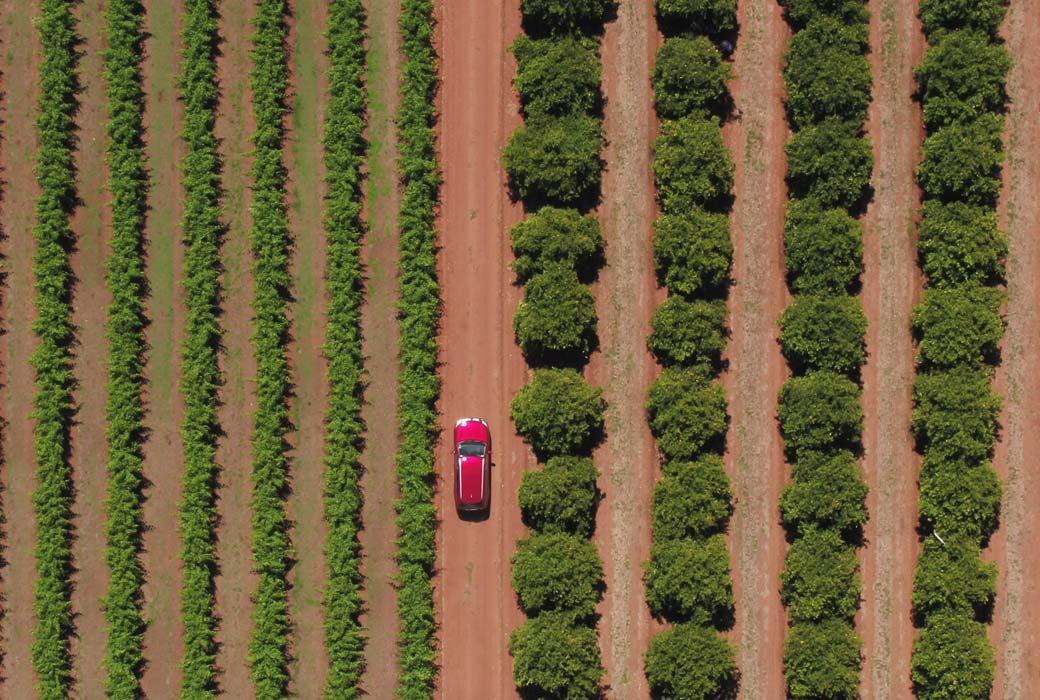 Car driving through Catania Fruit Salad Farm