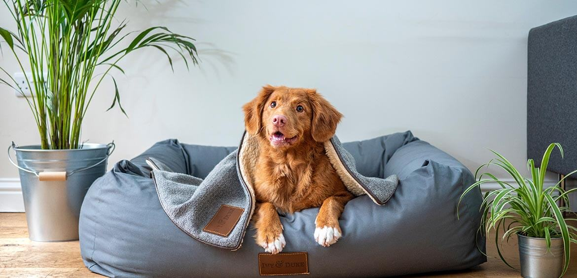 Dog in it's bed