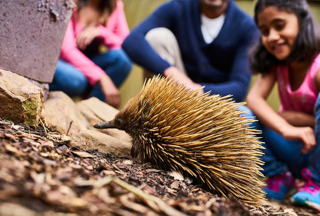 Kangaroo Island Wildlife Park, Playford Highway, Duncan