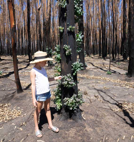 Kangaroo Island regenerations