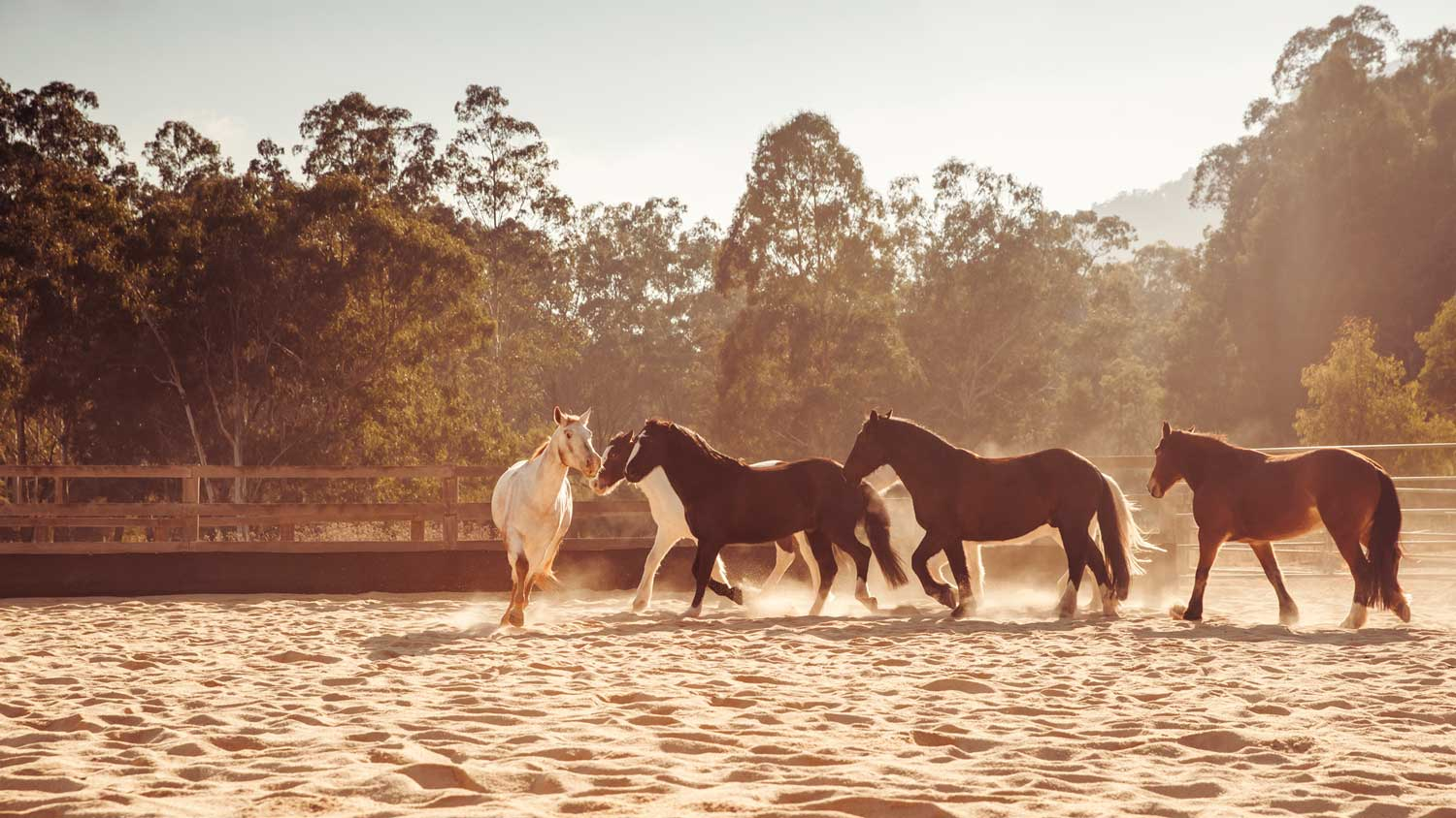 Horses at Emirates One&Only Wolgan Valley