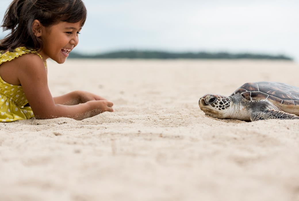Sea turtle hatching at Angsana Laguna Phuket