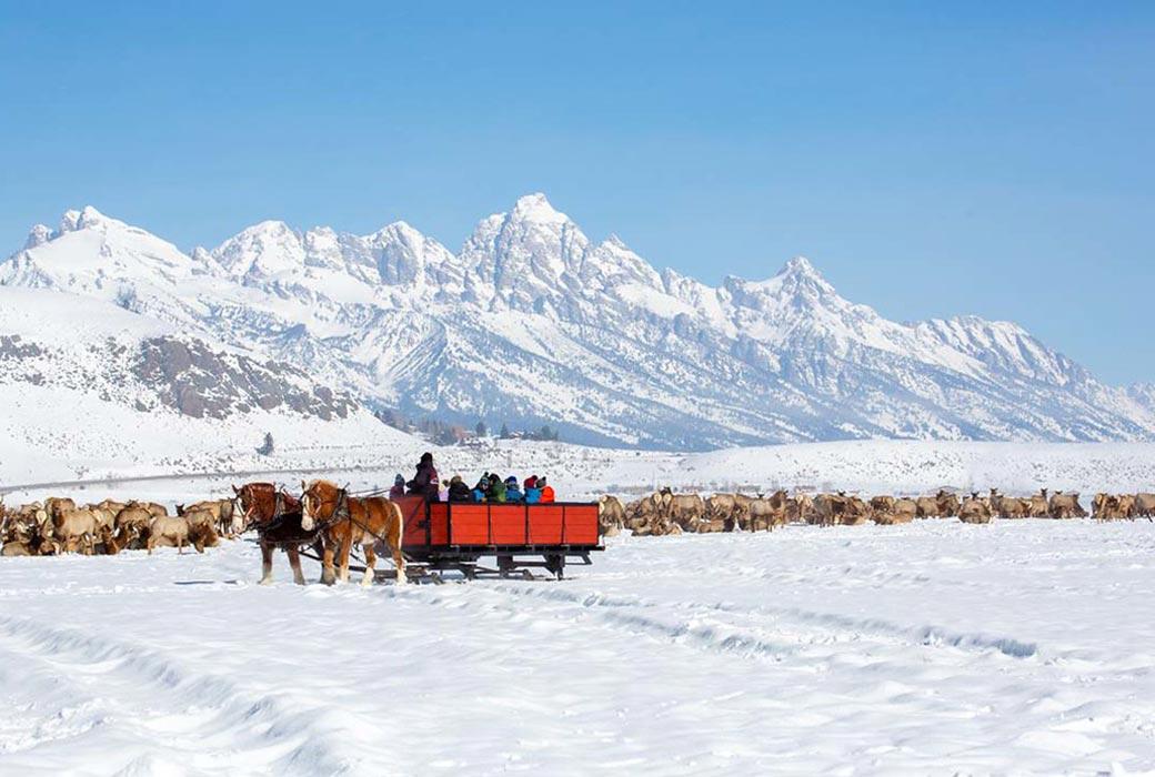 National Elk Refuge sleigh ride