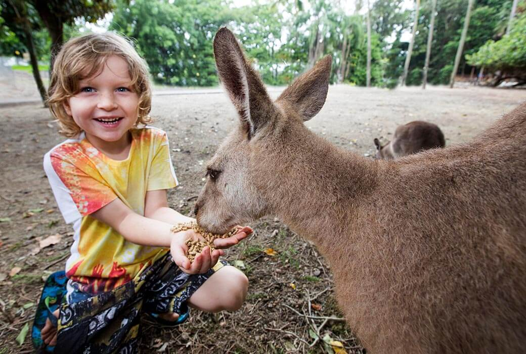 Kangaroo feeding at Cairns ZOOM & Wildlife Habitat Port Douglas