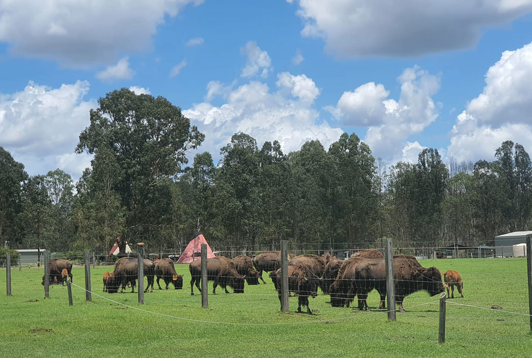 Aranyani Bison Adventure Tourist Park