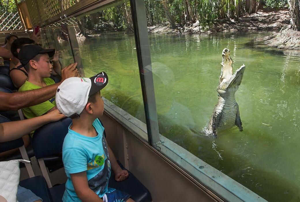 Harltey's Crocodile Adventures