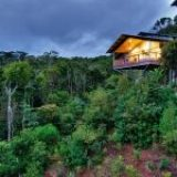 Escape to the rainforest with O'Reilly's Retreat