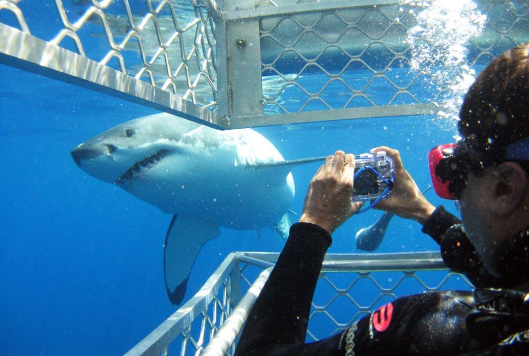 Shark Cage Dive in SA