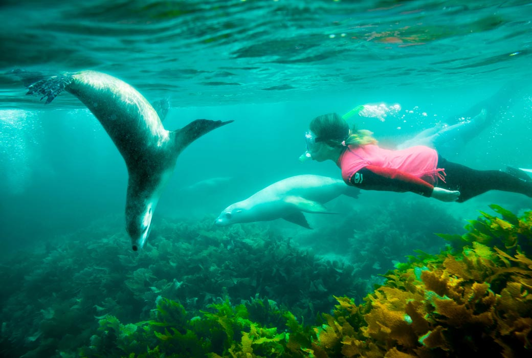 Swimming with Sea Lions at Seal Cove, Eyre Peninsula