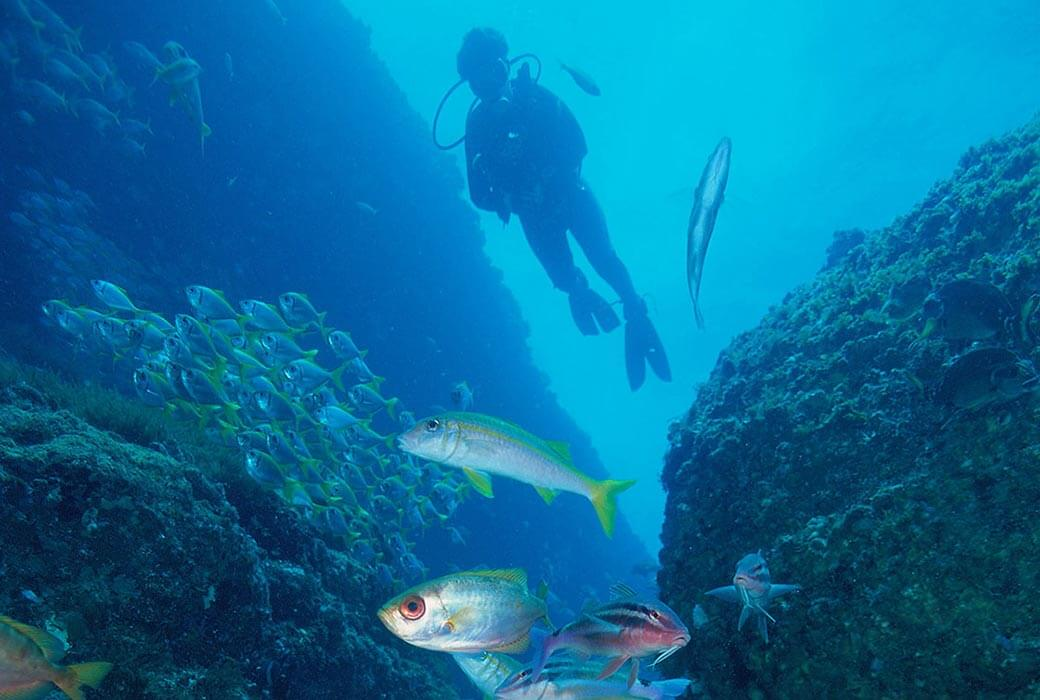 Solitary Island Marine Park, Coffs Coast