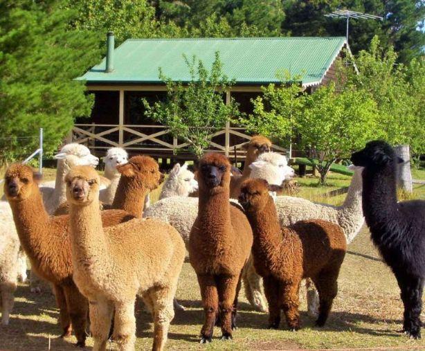 nsw farm stays