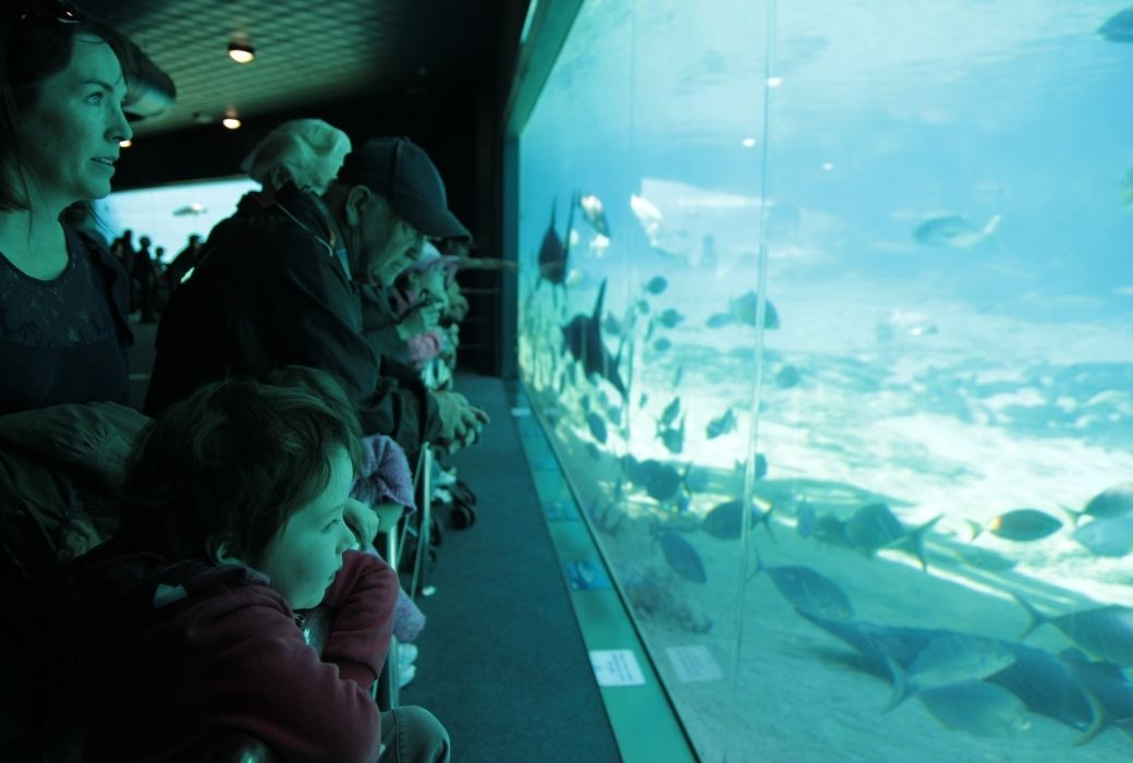Things to do on the Gold Coast with kids Seaworld
