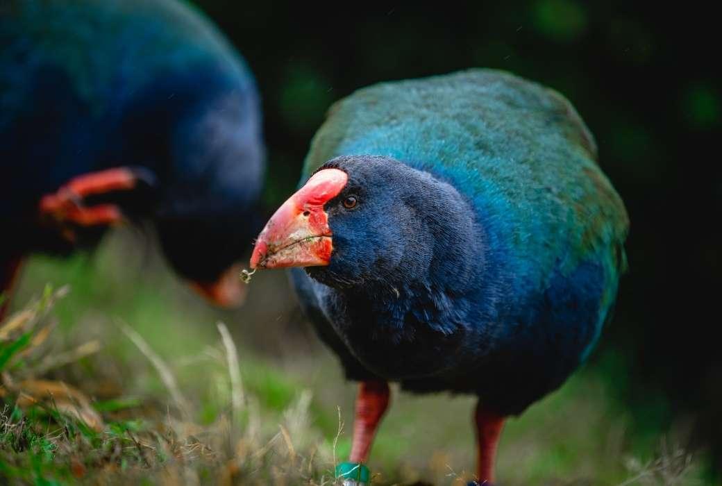 Orokonui Ecosanctuary © Dunedin NZ