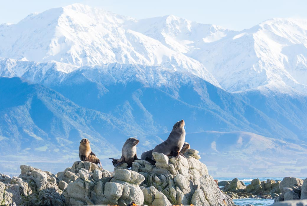 Kaikoura in the South Island of NZ